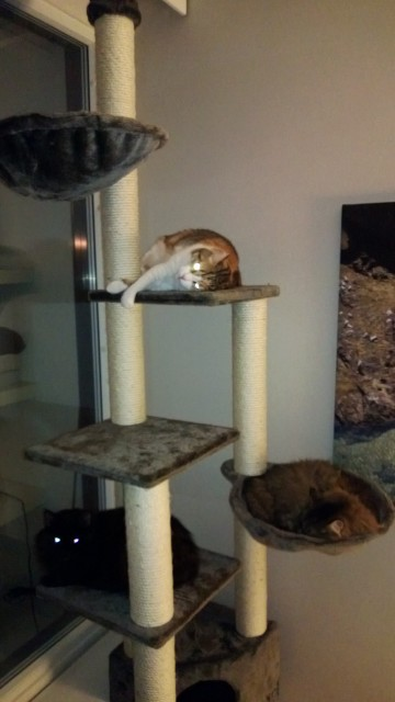 New cat tree in the living room with all our cats, happy!