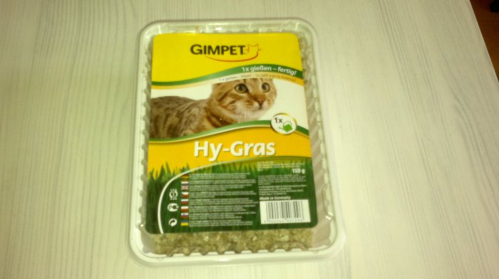 An example of a cat grass kit - indoor use.
