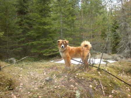 Lukas enjoying the woods.