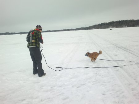 Recall training with 10 meters leash