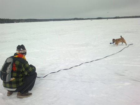 Recall training with a 10 meters leash