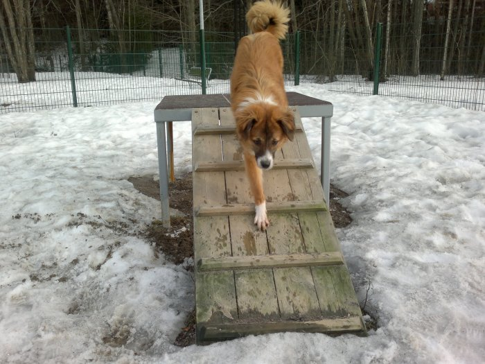 Lukas coming down the platform when asked followed by a treat