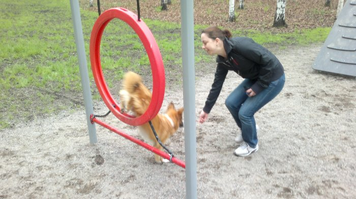 Motivated with treat to jump with a friend