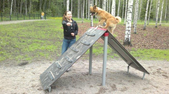 Lukas enjoying our friend agility training!