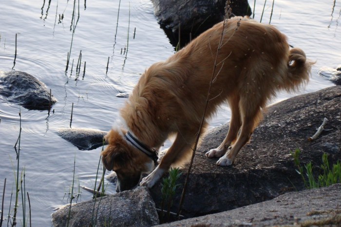 Lukas drinking water from the lake near our tenting place