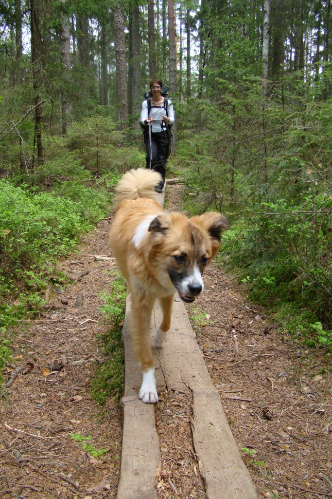 Lukas walking on the trail while on 10 meters leash