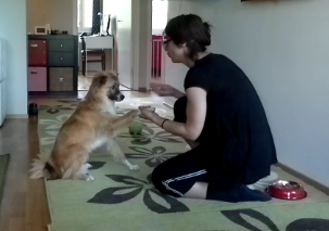 Lukas tranining to give the paw