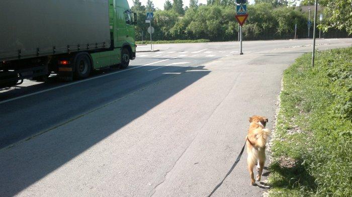 Lukas walking forward more relaxed near a big buss